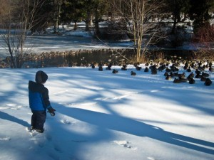 Visiting the (very cold) ducks