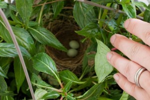 Eggs in a nest in a basket