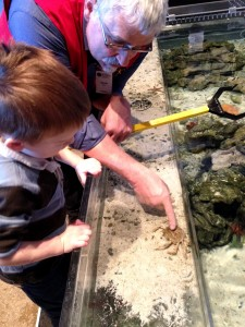 Learning about crabs and starfish!