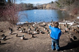 Feeding ducks (and geese and seagulls)