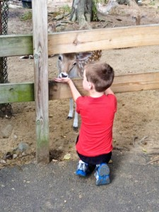 Feeding a deer (at York Zoo)